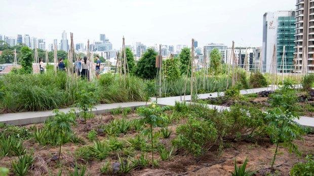 raffles-city-rooftop-garden